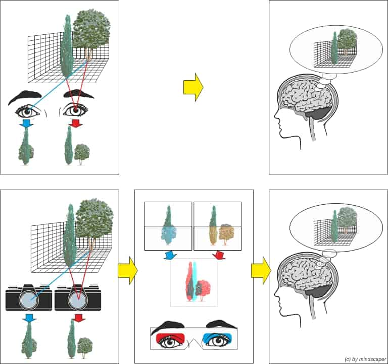stereopsis, spatial perception and stereophotography