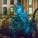 Xmas Tree at Minster Xmas Market - Berne