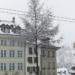 Snowed Tree - Berne in Winter