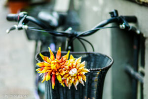 Flowers on the Bicycle - Still Life