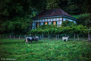 Rural Evening Moment at Aare in Berne