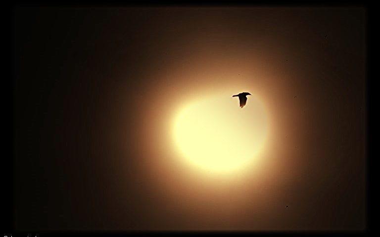 solar eclips with bird 2015