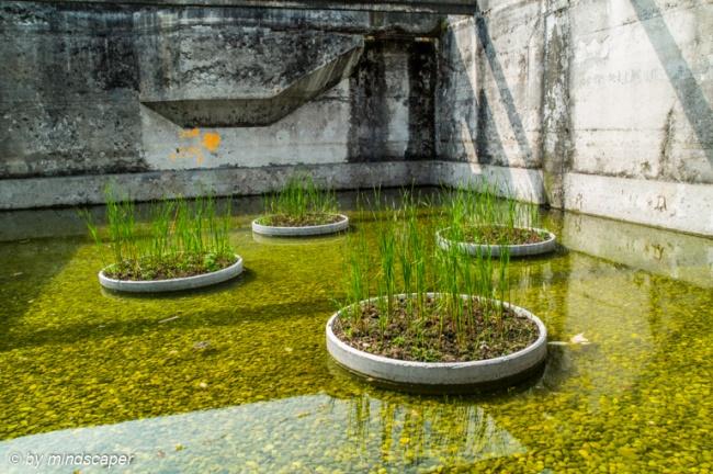 Water Garden in Former Sewage Plant - Uferpark Attisholz