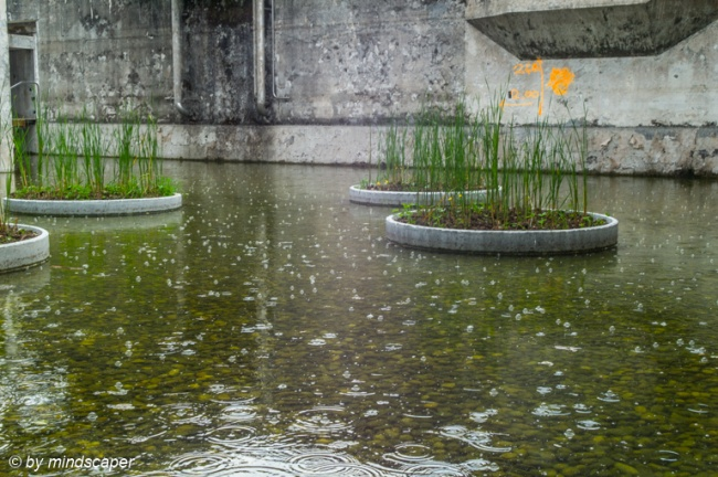 Rain at Water Garden in Former Sewage Plant - Uferpark Attisholz