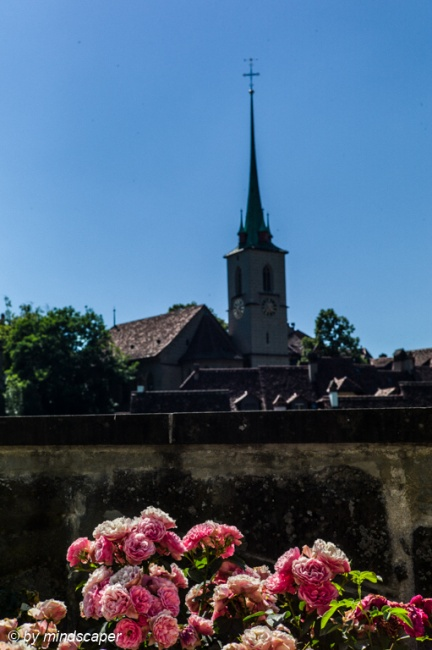 Roses with Nydegg Church - Summer in Berne