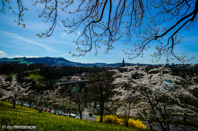 Berne Skyline in Spring - Seen From Rosengarten