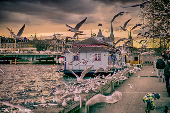 Seagulls at Utoquai on a Winter Evening
