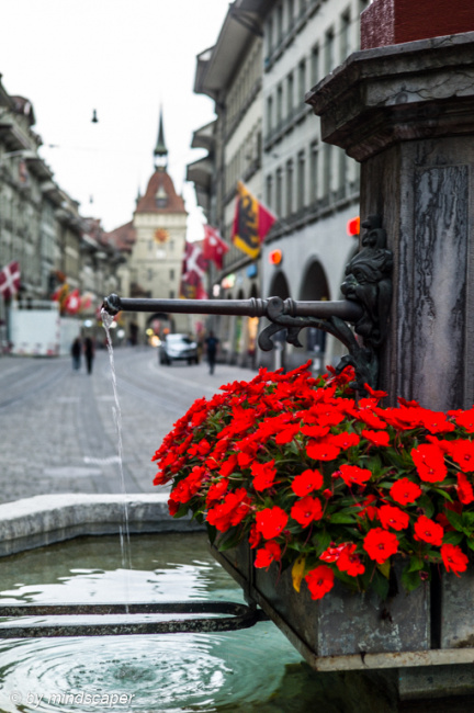 Flowers at Marksman Fountain in Marktgasse