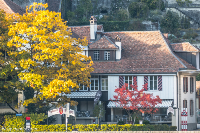 Berne Matte with Autumn Trees
