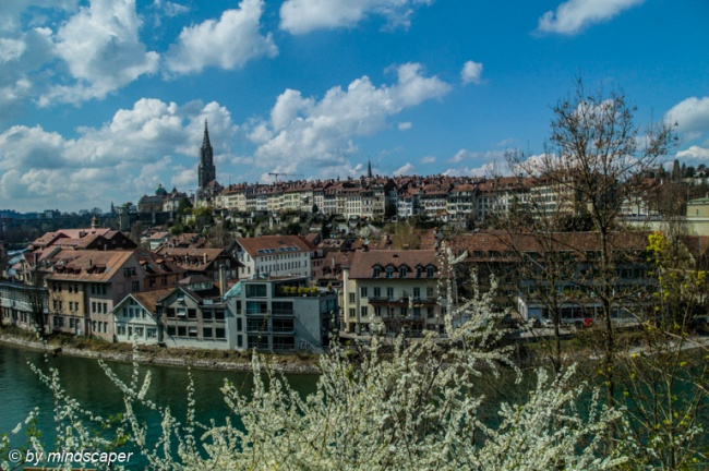 Berne Skyline with Blossoms Tree