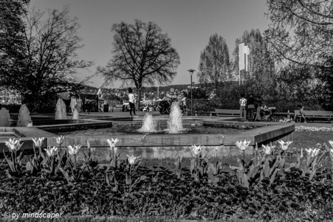Tulips ah Hexagon Fountain - Zurich in Black & White - HDR
